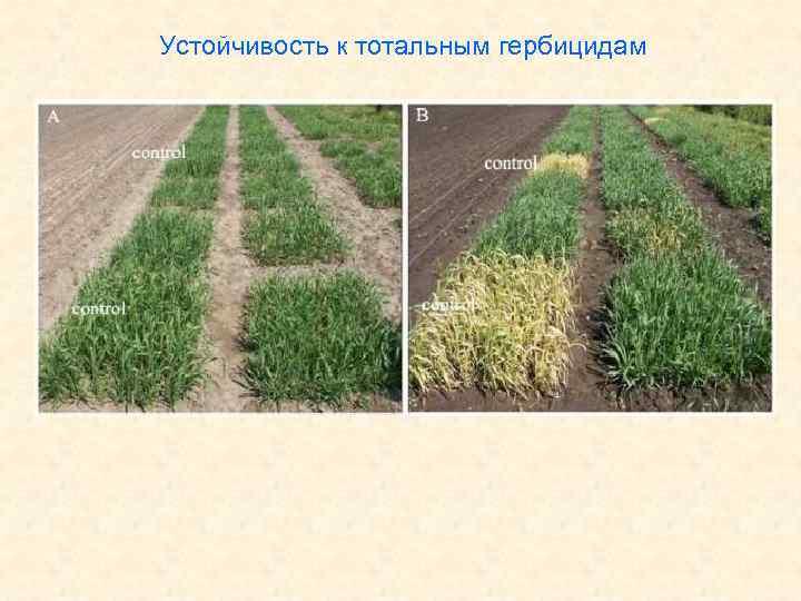 Устойчивость к тотальным гербицидам