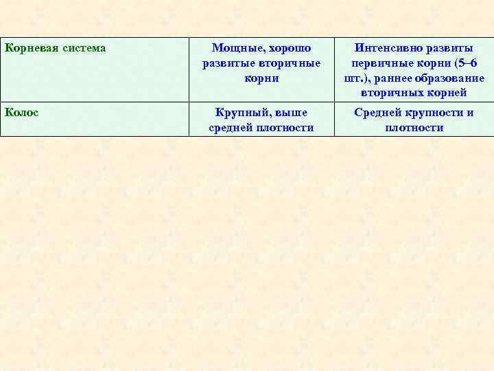 Корневая система Колос Мощные, хорошо развитые вторичные корни Интенсивно развиты первичные корни (5– 6