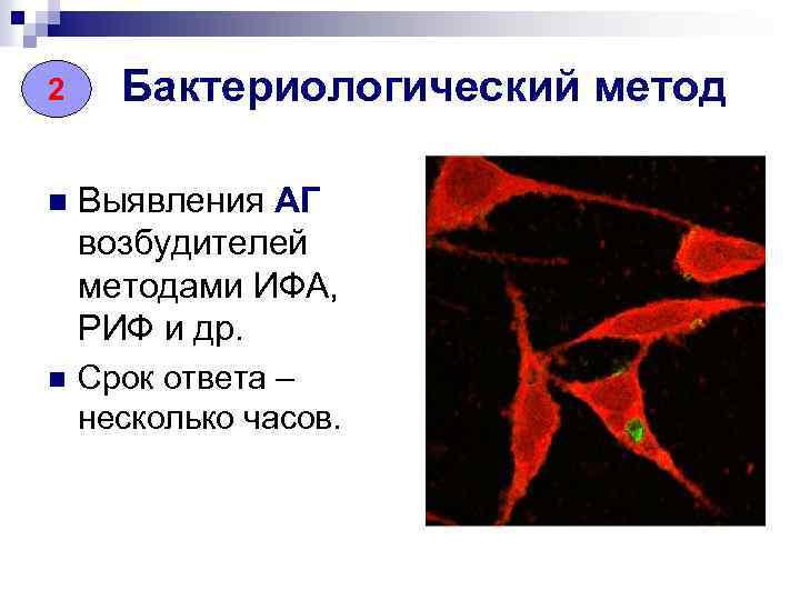 2 Бактериологический метод n Выявления АГ возбудителей методами ИФА, РИФ и др. n Срок