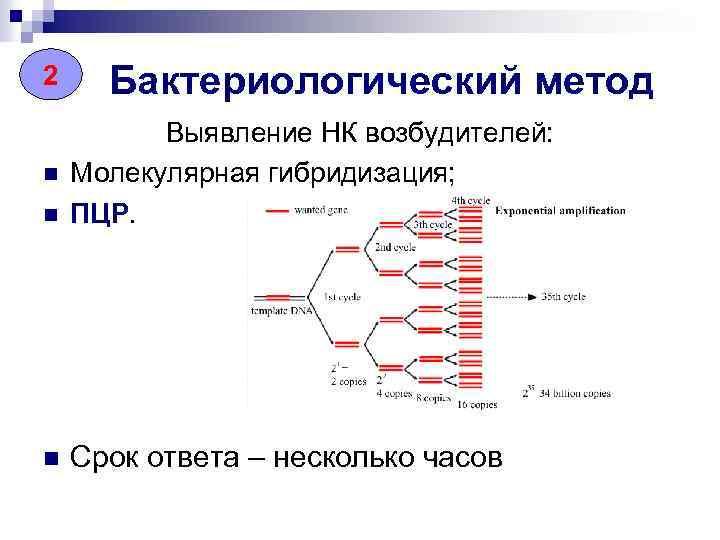 2 Бактериологический метод n Выявление НК возбудителей: Молекулярная гибридизация; ПЦР. n Срок ответа –