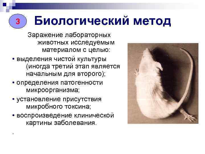 3 Биологический метод Заражение лабораторных животных исследуемым материалом с целью: • выделения чистой культуры