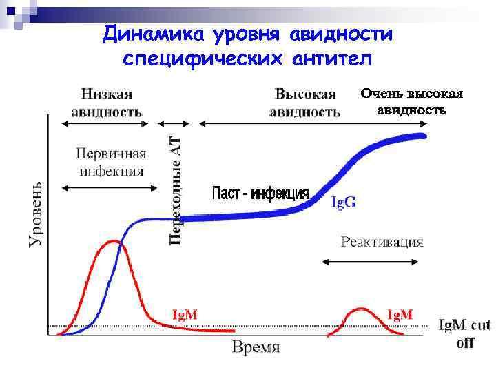 Динамика уровня авидности специфических антител