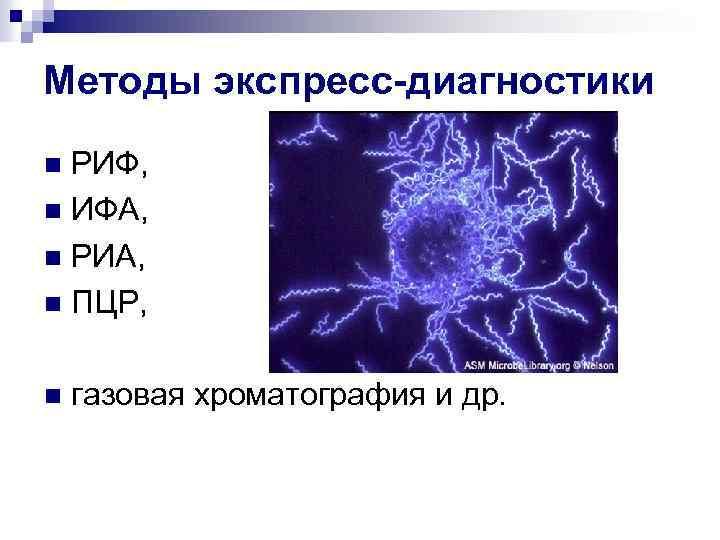 Методы экспресс-диагностики РИФ, n ИФА, n РИА, n ПЦР, n n газовая хроматография и