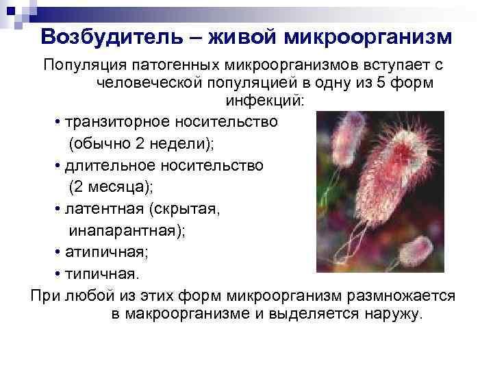 Возбудитель – живой микроорганизм Популяция патогенных микроорганизмов вступает с человеческой популяцией в одну из