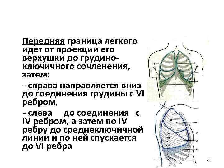 Передняя граница легкого идет от проекции его верхушки до грудиноключичного сочленения, затем: - справа