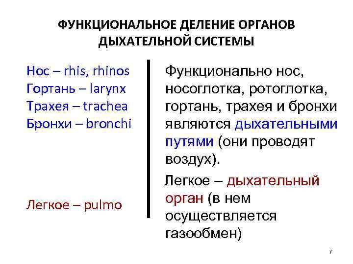 ФУНКЦИОНАЛЬНОЕ ДЕЛЕНИЕ ОРГАНОВ ДЫХАТЕЛЬНОЙ СИСТЕМЫ Нос – rhis, rhinos Гортань – larynx Трахея –