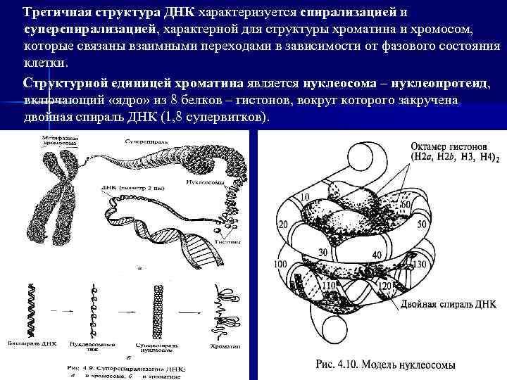 третичная структура днк картинки отличие