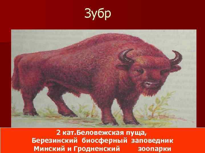 Красная книга с картинками республики беларусь