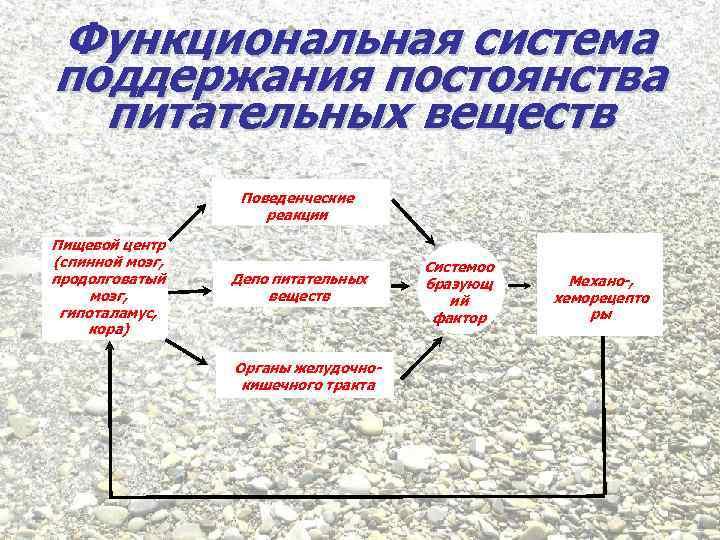 Функциональная система поддержания постоянства питательных веществ Поведенческие реакции Пищевой центр (спинной мозг, продолговатый мозг,
