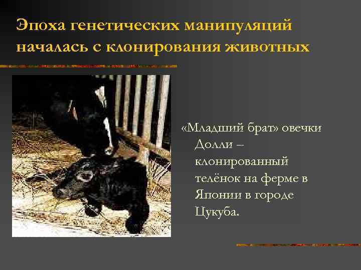 Эпоха генетических манипуляций началась с клонирования животных «Младший брат» овечки Долли – клонированный телёнок