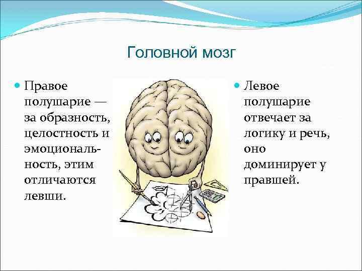 правое полушарие мозга отвечает за картинки гкх том