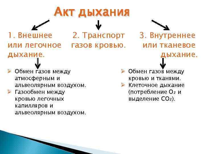 Акт дыхания 1. Внешнее   2. Транспорт  3. Внутреннее