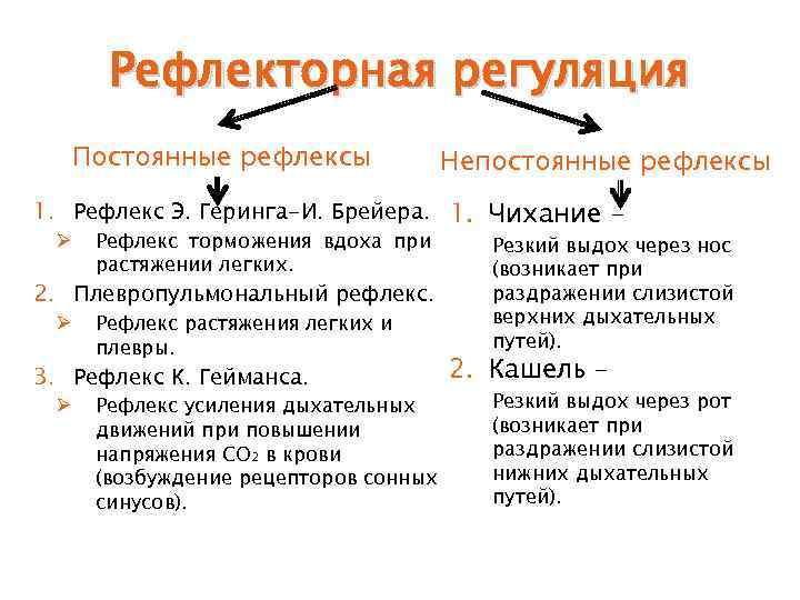 Рефлекторная регуляция  Постоянные рефлексы    Непостоянные рефлексы 1. Рефлекс Э.