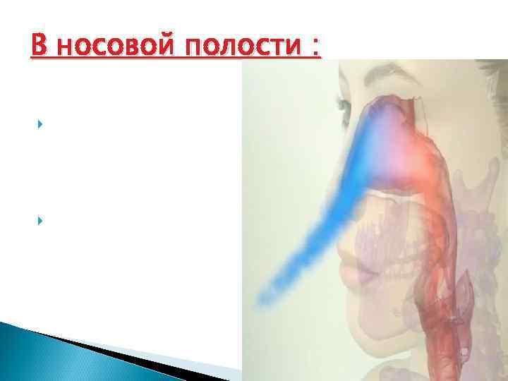 В носовой полости :  Воздух увлажняется и обезвреживается с помощью слизи Согревается из-за
