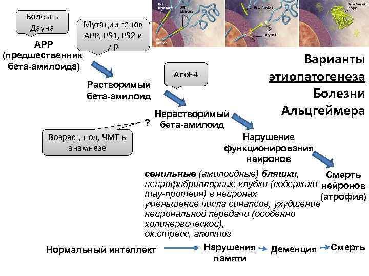 Болезнь Дауна  Мутации генов    APP, PS 1, PS