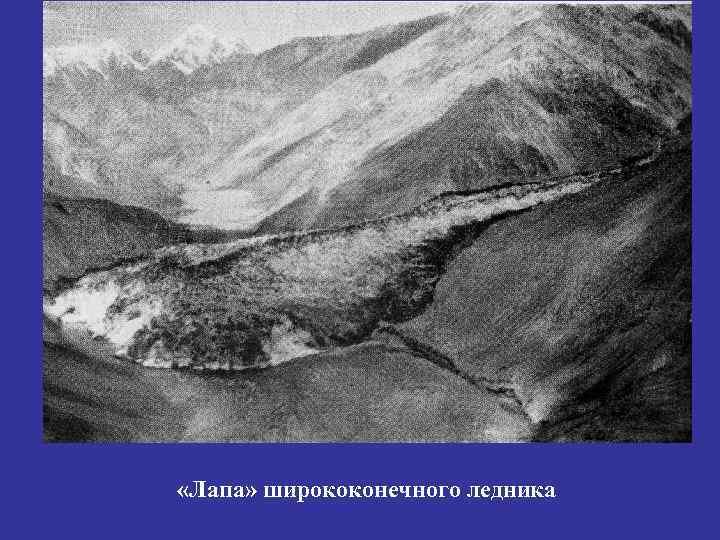 «Лапа» ширококонечного ледника