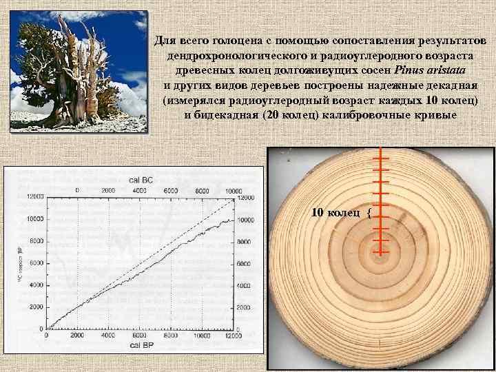 Для всего голоцена с помощью сопоставления результатов  дендрохронологического и радиоуглеродного возраста  древесных
