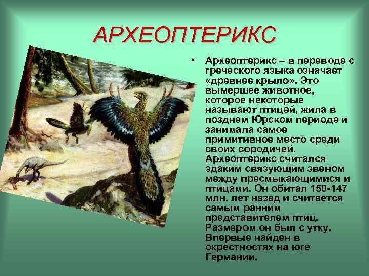 АРХЕОПТЕРИКС  • Археоптерикс – в переводе с   греческого языка означает
