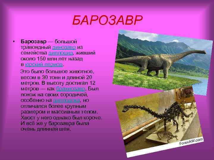 БАРОЗАВР • Барозавр — большой  травоядный динозавр из