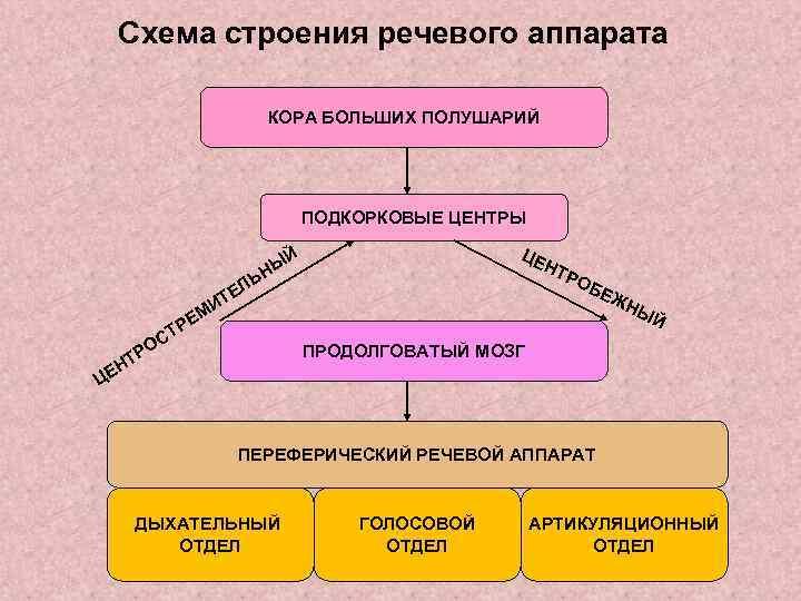 Схема строения речевого аппарата     КОРА БОЛЬШИХ ПОЛУШАРИЙ