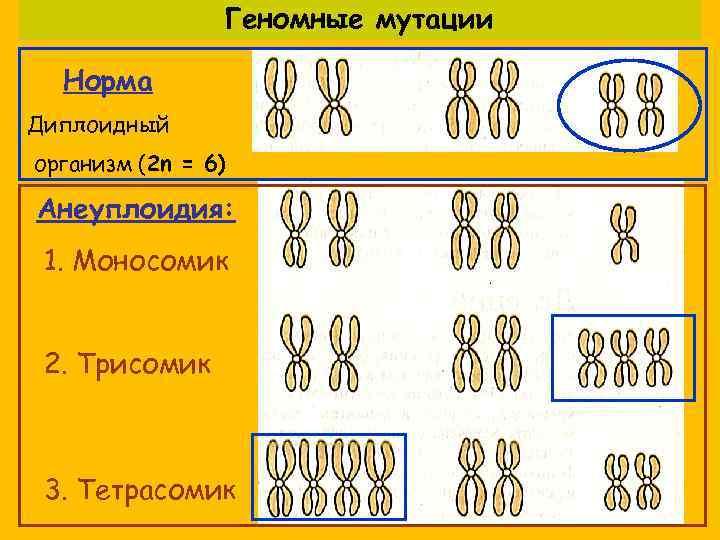 Геномные мутации  Норма Диплоидный организм (2 n = 6)