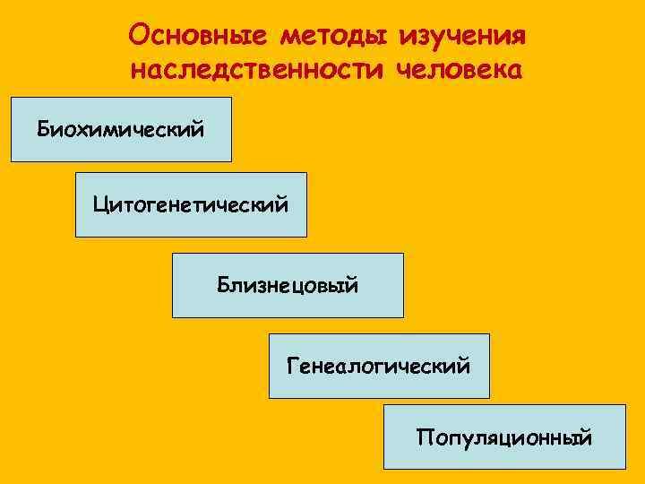 Основные методы изучения  наследственности человека Биохимический  Цитогенетический