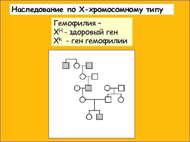 Наследование по Х-хромосомному типу   Гемофилия –   XH - здоровый ген