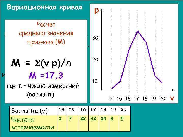Вариационная кривая  p Вариационная кривая – Каждое значение признака  Расчет графическоезначения