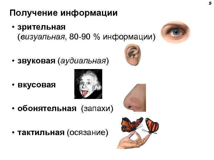 5 Получение информации • зрительная  (визуальная,
