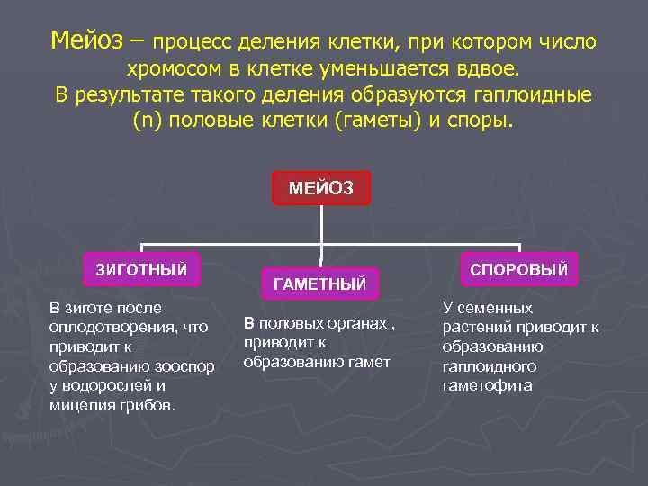 Мейоз – процесс деления клетки, при котором число  хромосом в клетке уменьшается вдвое.