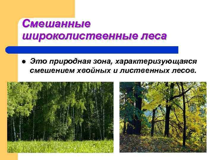 Смешанные широколиственные леса l  Это природная зона, характеризующаяся смешением хвойных и лиственных лесов.