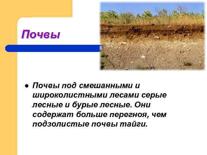Почвы  l  Почвы под смешанными и широколистными лесами серые лесные и бурые