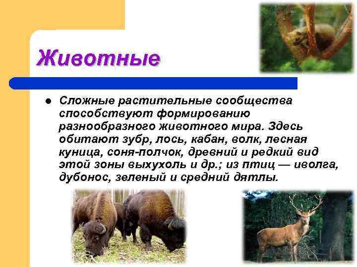 Животные l  Сложные растительные сообщества способствуют формированию разнообразного животного мира. Здесь обитают зубр,