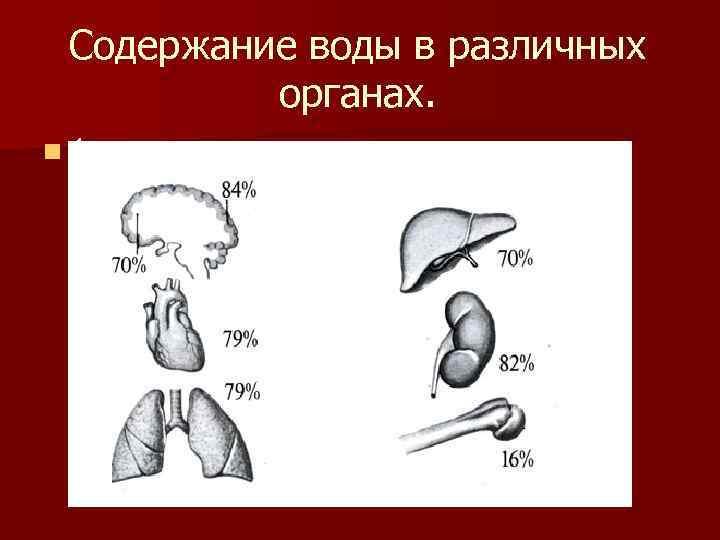 Содержание воды в различных  органах. n 1
