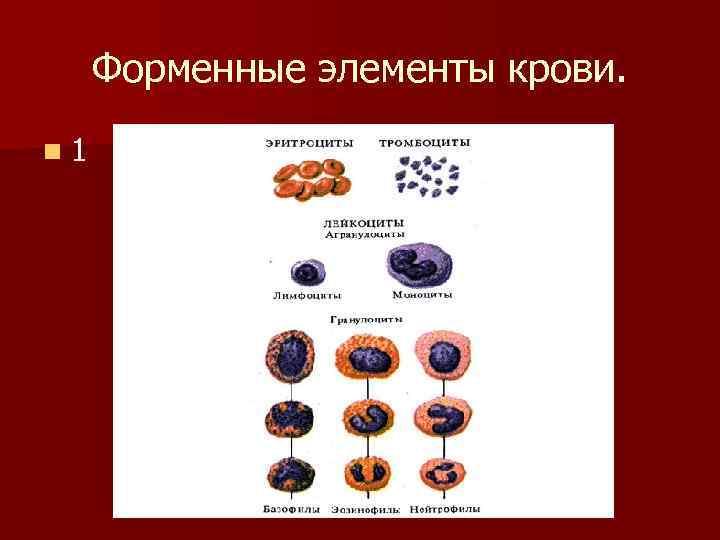 Форменные элементы крови. n 1