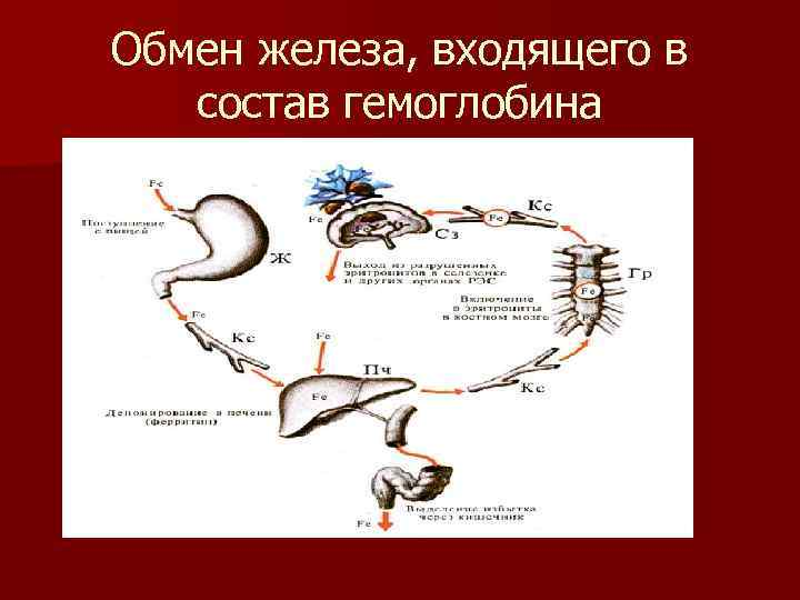 Обмен железа, входящего в состав гемоглобина