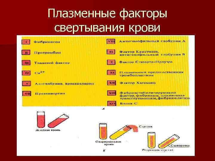 Плазменные факторы  свертывания крови
