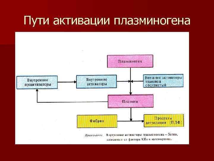 Пути активации плазминогена