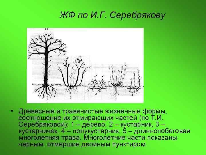 ЖФ по И. Г. Серебрякову • Древесные и травянистые жизненные формы,