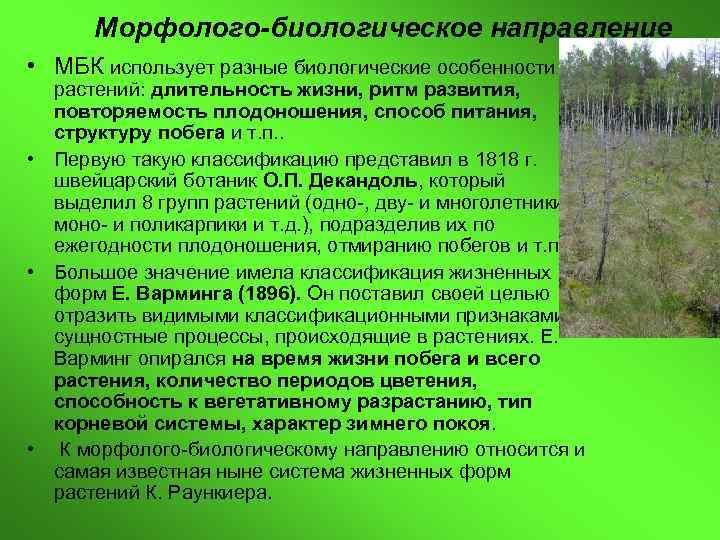 Морфолого-биологическое направление • МБК использует разные биологические особенности  растений: длительность жизни, ритм