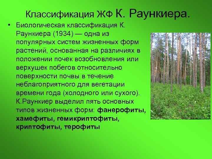 Классификация ЖФ К.  Раункиера.  • Биологическая классификация К.  Раункиера