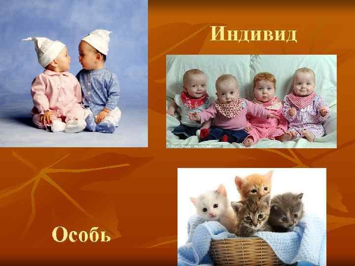 Индивид Особь