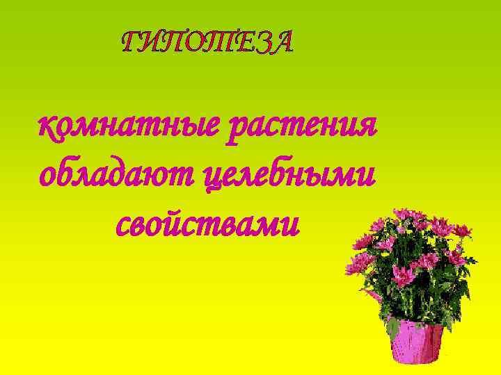 ГИПОТЕЗА комнатные растения обладают целебными свойствами