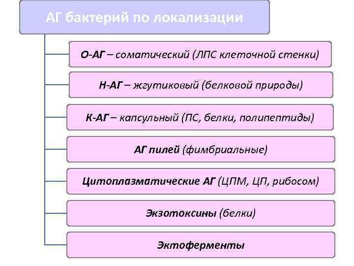 АГ бактерий по локализации О-АГ – соматический (ЛПС клеточной стенки)   Н-АГ –