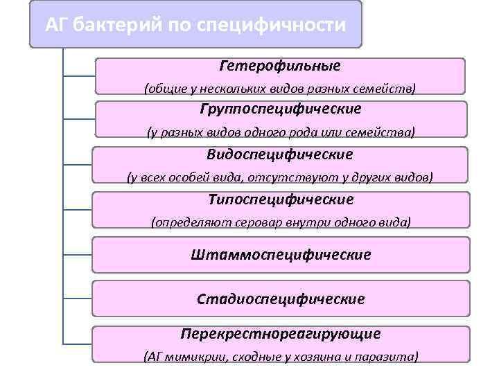 АГ бактерий по специфичности     Гетерофильные   (общие у нескольких