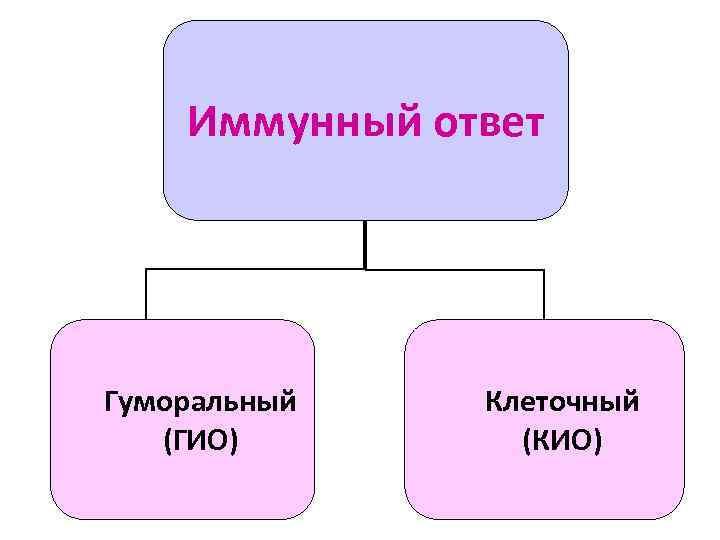 Иммунный ответ Гуморальный  Клеточный  (ГИО)   (КИО)