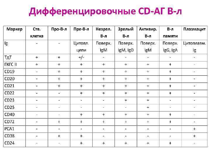 Дифференцировочные CD-АГ В-л