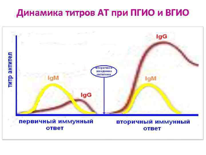 Динамика титров АТ при ПГИО и ВГИО