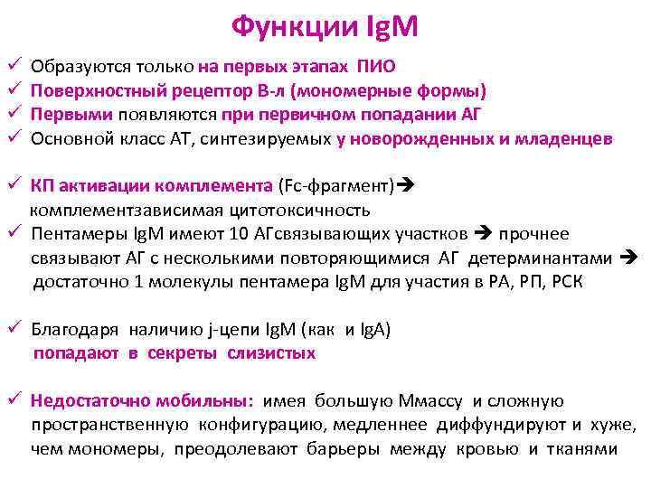 Функции Ig. M ü  Образуются только на первых этапах
