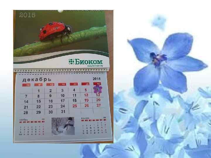 • календарь